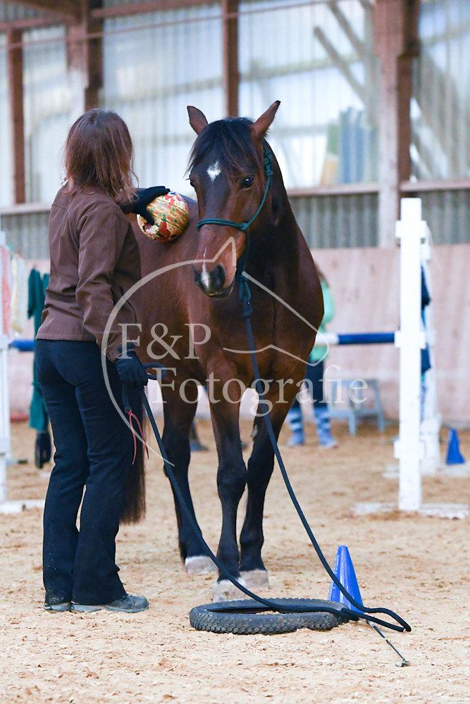 BAP P7.2 Pferd Stufe II-Kat. II