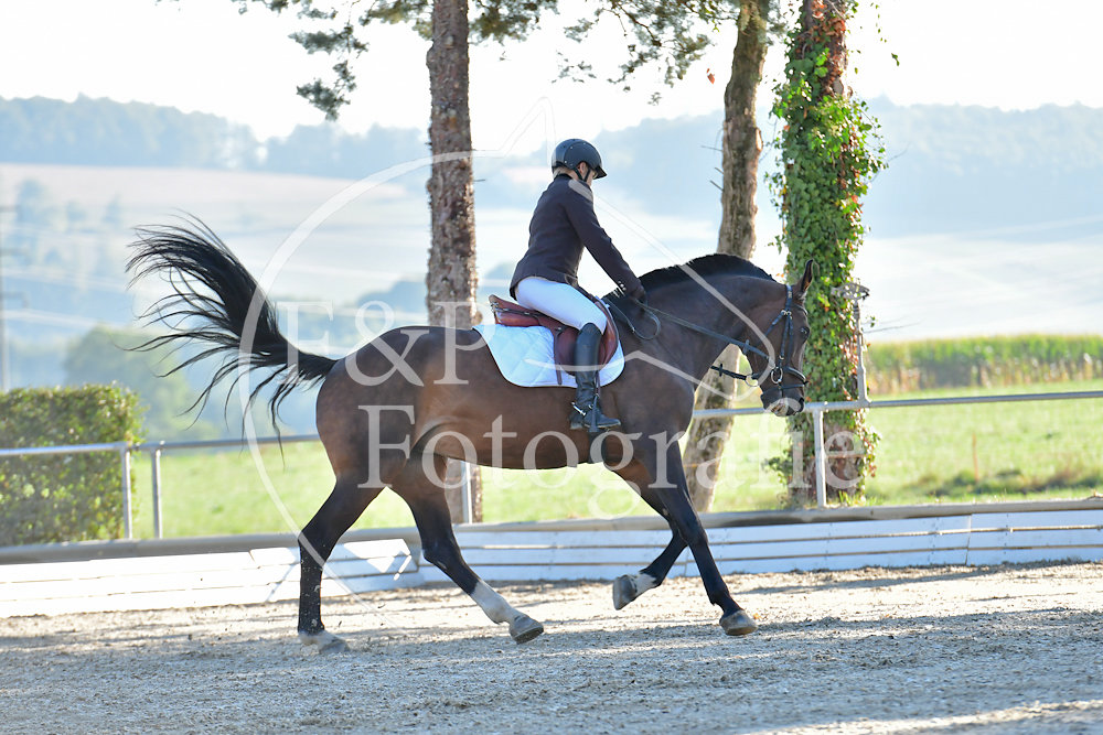 Dressage P3 Libre a la carte Start 1-20