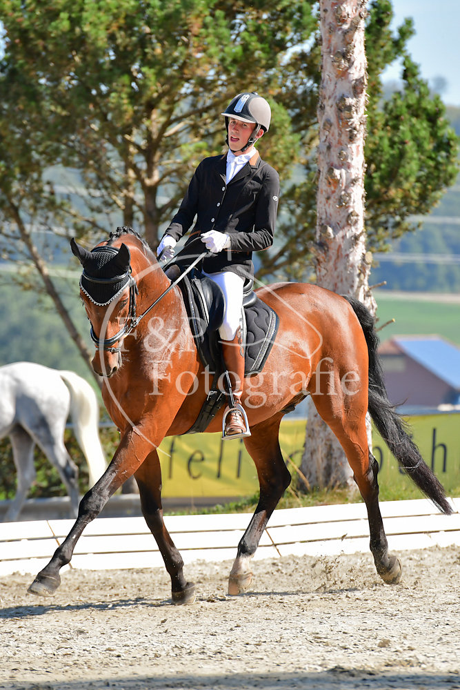 Dressage P3 Libre a la carte Start 21-42