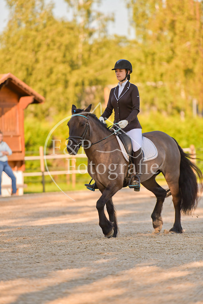 Gehorsam P13 Pony Stufe ll